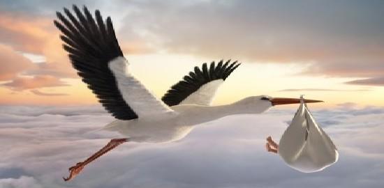 stork-og-baby