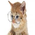 Kattenes Ordbog