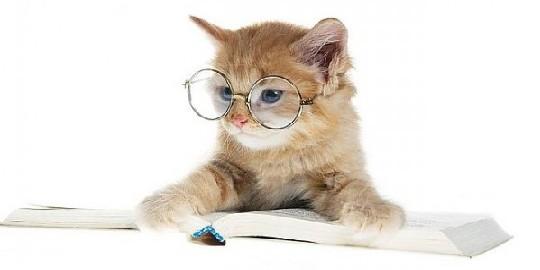 katteordbog