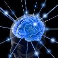 Hvilken hjernehalvdel bruger du?