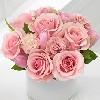 lysrod rose
