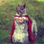 Et egern tager hævn