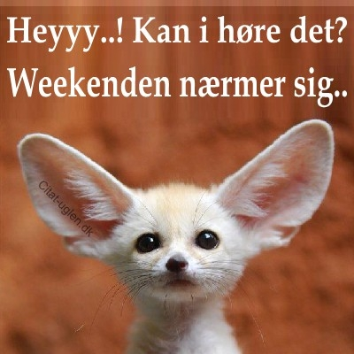 sjove weekend citater Facebook Billede Hilsner   Weekend : Citat uglen.dk sjove weekend citater
